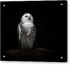 An Owl Acrylic Print by Kaneko Ryo