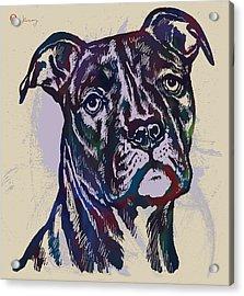 Animal Pop Art Etching Poster - Dog 13 Acrylic Print by Kim Wang