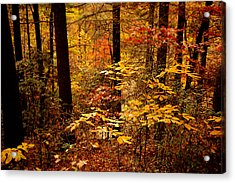 Acrylic Print featuring the photograph Appalachian Fall by Phyllis Peterson