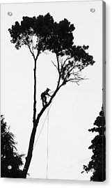 Arborist At Work Acrylic Print