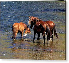 Arizona Wild Horses On The Salt River Acrylic Print