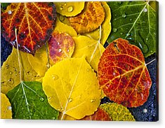 Aspen Rainbow Acrylic Print