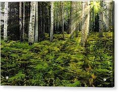Aspen Sunrise Acrylic Print