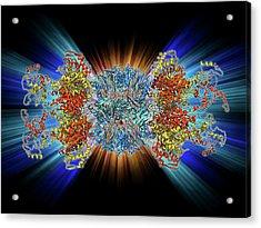 Atp-dependent Protease Molecule Acrylic Print by Laguna Design