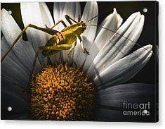 Australian Grasshopper On Flowers. Spring Concept Acrylic Print by Jorgo Photography - Wall Art Gallery