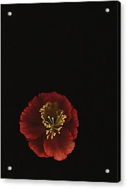 Autographic Poppy - Color Acrylic Print