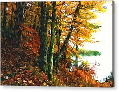 Autumn Colors In The Forest 1 Acrylic Print by Lanjee Chee