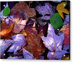 Autumn Groundcover Acrylic Print