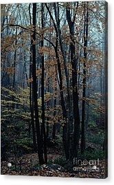 Autumn In The Forest Acrylic Print by Adeline Byford