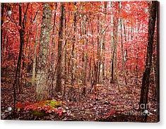 Autumn Landscape Acrylic Print by Kim Fearheiley