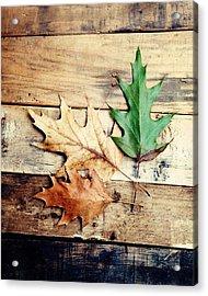 Autumn Leaves Ablaze With Color Acrylic Print by Kim Fearheiley