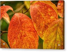 Autumn Leaves Acrylic Print by Kathi Isserman
