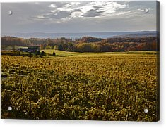 Autumn On Old Mission Peninsula  Acrylic Print