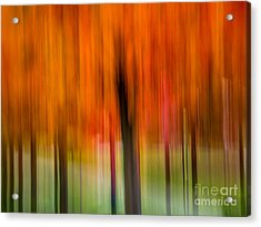 Autumn Park 2 Acrylic Print by Susan Cole Kelly Impressions