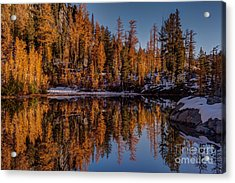 Autumn Reflected Acrylic Print by Mike Reid