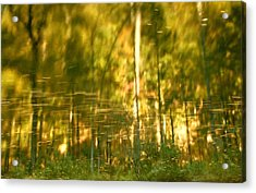 Autumn Reflections In Tennessee Acrylic Print by Dan Sproul
