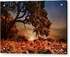 Autumn Vineyard Acrylic Print