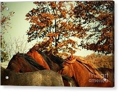 Autumn Wild Horses Acrylic Print