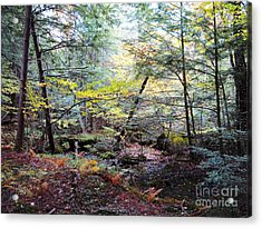Autumn Woods Acrylic Print by Linda Marcille