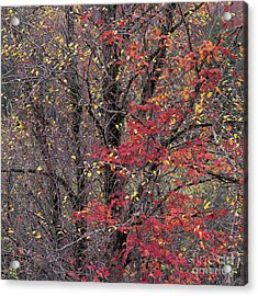 Acrylic Print featuring the photograph Autumn's Palette by Alan L Graham