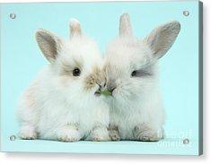 Baby Bunnies Acrylic Print