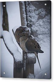 Acrylic Print featuring the photograph Baby It's Cold Outside 2 by Phil Abrams