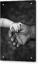 Babys Hand Holding On To Adult Hand Acrylic Print by Corey Hochachka