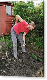 Back Pain From Gardening Acrylic Print by Cordelia Molloy