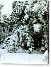 Backyard Snow Acrylic Print by Elaine Williams