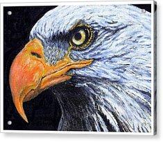 Bald Eagle Acrylic Print by David Blank