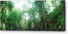 Bamboo Forest, Chiang Mai, Thailand Acrylic Print