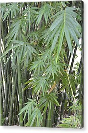 Bamboo 2 Acrylic Print by To-Tam Gerwe