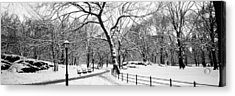 Bare Trees During Winter In A Park Acrylic Print