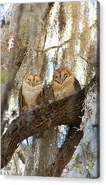Barn Owls Acrylic Print