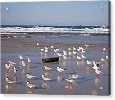 Acrylic Print featuring the photograph Beach Birds by Ankya Klay