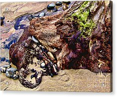 Beach Stump And Stones Acrylic Print by Joseph Vittek