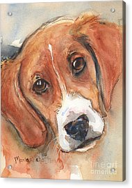 Beagle Dog  Acrylic Print