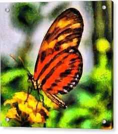 Beautiful Butterfly Acrylic Print