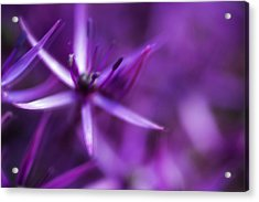 Beautiful Purple Floral Abstract Acrylic Print by Matthew Gibson
