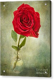 Beautiful Rose Acrylic Print