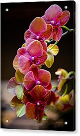Beauty Of Orchids  Acrylic Print by Julie Palencia
