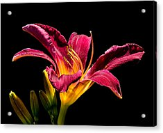 Beauty On The Black #5 Acrylic Print