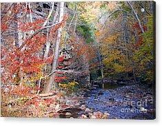 Beaverdam Creek Acrylic Print