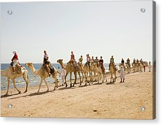 Bedouins And Their Camels Acrylic Print by Ashley Cooper