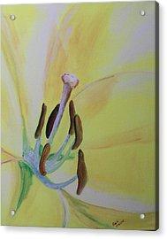 Bee Sees Acrylic Print by Rich Mason