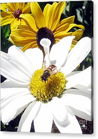 Acrylic Print featuring the photograph Beecause by Janice Westerberg