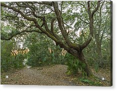 Behind The House Acrylic Print by Jon Glaser