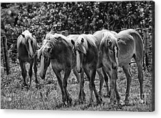 Acrylic Print featuring the photograph Belgian Draft Horses by Wilma  Birdwell