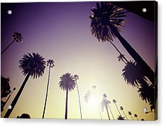 Beverly Hills Palm Trees Acrylic Print