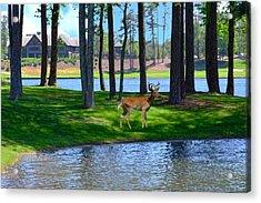 Big Canoe Buck Acrylic Print by Bob Jackson